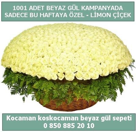 1001 adet beyaz gül sepeti özel kampanyada  Giresun uluslararası çiçek gönderme