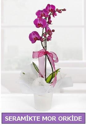 Seramik içerisinde birinci kalite tek dallı mor orkide  Giresun cicekciler , cicek siparisi