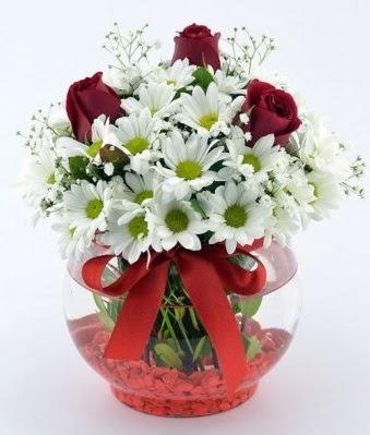 Fanusta 3 Gül ve Papatya  Giresun online çiçekçi , çiçek siparişi