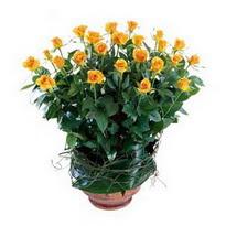 Giresun çiçekçi telefonları  10 adet sari gül tanzim cam yada mika vazoda çiçek