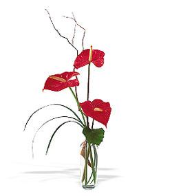 Giresun yurtiçi ve yurtdışı çiçek siparişi  cam yada mika Vazoda 3 adet  antoryum