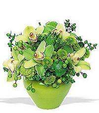 cam yada mika vazoda 5 adet orkide   Giresun online çiçek gönderme sipariş