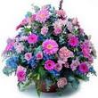 karisik mevsim kir çiçekleri  Giresun uluslararası çiçek gönderme