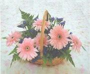 gerbera çiçeklerinde sepet   Giresun 14 şubat sevgililer günü çiçek