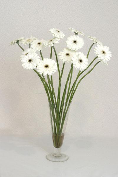 Giresun internetten çiçek satışı  cam vazo içerisinde 17 adet sade gerbera