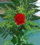 1 adet kirmizi gül buketi   Giresun çiçek gönderme sitemiz güvenlidir