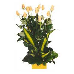 12 adet beyaz gül aranjmani  Giresun çiçekçiler