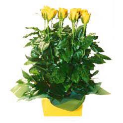 11 adet sari gül aranjmani  Giresun online çiçek gönderme sipariş