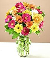 Giresun çiçekçi mağazası  17 adet karisik gerbera