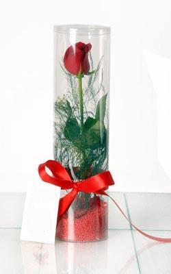 Giresun 14 şubat sevgililer günü çiçek  Silindir vazoda tek kirmizi gül