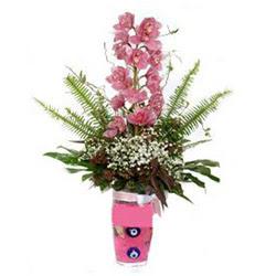Giresun kaliteli taze ve ucuz çiçekler  cam yada mika vazo içerisinde tek dal orkide çiçegi
