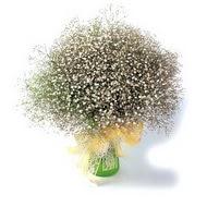 Giresun internetten çiçek satışı  cam yada mika vazo içerisinde cipsofilya demeti