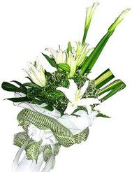 Giresun internetten çiçek siparişi  3 dal kazablanka çiçegi ve yesillikler