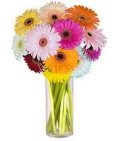 Giresun İnternetten çiçek siparişi  Farkli renklerde 15 adet gerbera çiçegi