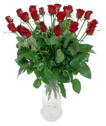 Giresun hediye sevgilime hediye çiçek  11 adet kimizi gülün ihtisami cam yada mika vazo modeli