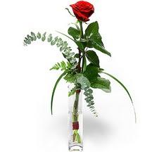 Giresun çiçek , çiçekçi , çiçekçilik  Sana deger veriyorum bir adet gül cam yada mika vazoda