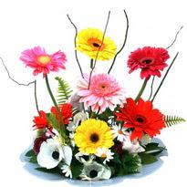 Giresun kaliteli taze ve ucuz çiçekler  camda gerbera ve mis kokulu kir çiçekleri