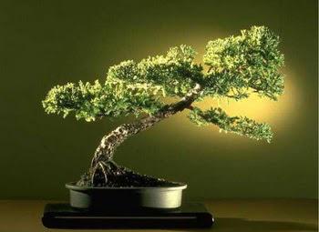 ithal bonsai saksi çiçegi  Giresun güvenli kaliteli hızlı çiçek