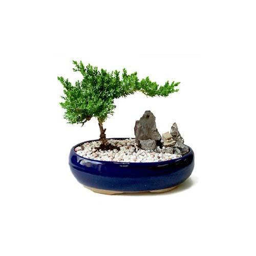 ithal bonsai saksi çiçegi  Giresun anneler günü çiçek yolla