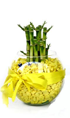 cam fanus içerisinde bambo  Giresun online çiçekçi , çiçek siparişi