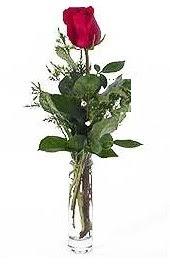 Vazo içerisinde 1 adet kirmizi gül  Giresun çiçekçi telefonları