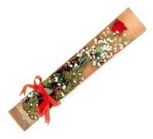 1 adet kirmizi gül  Giresun hediye sevgilime hediye çiçek