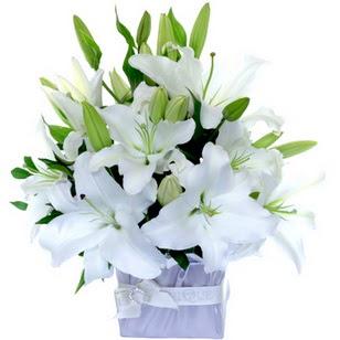 Giresun 14 şubat sevgililer günü çiçek  2 dal cazablanca vazo çiçeği