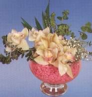 Giresun internetten çiçek satışı  Dal orkide kalite bir hediye