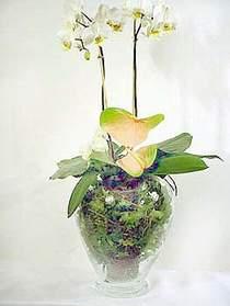 Giresun çiçek online çiçek siparişi  Cam yada mika vazoda özel orkideler