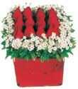Giresun anneler günü çiçek yolla  Kare cam yada mika içinde kirmizi güller - anneler günü seçimi özel çiçek