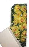 Giresun anneler günü çiçek yolla  Kutu içerisine dal cymbidium orkide