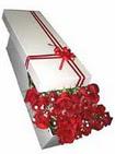 Giresun hediye sevgilime hediye çiçek  11 adet 1.kalite magnum güller