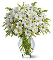 Vazo içerisinde beyaz krizantem çiçekleri  Giresun güvenli kaliteli hızlı çiçek
