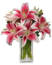 Vazo içerisinde 5 dal kazablanka çiçeği  Giresun çiçekçi telefonları