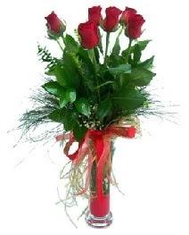 vazo içerisinde 5 kırmızı gül  Giresun internetten çiçek siparişi