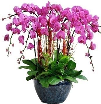 9 dallı mor orkide  Giresun çiçek , çiçekçi , çiçekçilik