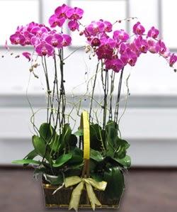 4 dallı mor orkide  Giresun internetten çiçek siparişi
