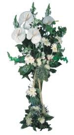 Giresun internetten çiçek satışı  antoryumlarin büyüsü özel