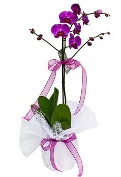 Tek dallı mor orkide  Giresun hediye sevgilime hediye çiçek