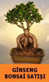 Ginseng bonsai satışı japon ağacı  Giresun çiçek gönderme