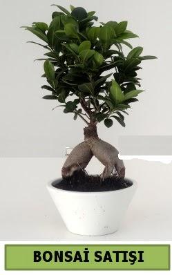 Bonsai japon ağacı satışı  Giresun çiçek siparişi sitesi