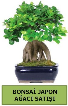 Bonsai japon ağacı satışı  Giresun çiçek online çiçek siparişi