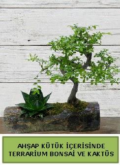 Ahşap kütük bonsai kaktüs teraryum  Giresun İnternetten çiçek siparişi