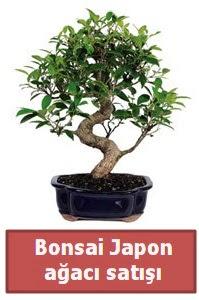 Japon ağacı bonsai satışı  Giresun yurtiçi ve yurtdışı çiçek siparişi