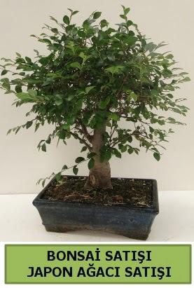 Minyatür bonsai japon ağacı satışı  Giresun uluslararası çiçek gönderme