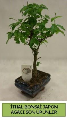 İthal bonsai japon ağacı bitkisi  Giresun hediye çiçek yolla