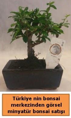 Japon ağacı bonsai satışı ithal görsel  Giresun 14 şubat sevgililer günü çiçek