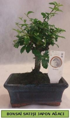 Minyatür bonsai ağacı satışı  Giresun anneler günü çiçek yolla