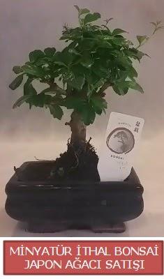 Küçük görsel bonsai japon ağacı bitkisi  Giresun çiçek servisi , çiçekçi adresleri