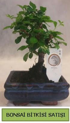 Bonsai ithal görsel minyatür japon ağacı  Giresun çiçek mağazası , çiçekçi adresleri